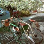 Springtime bikes on Main Street
