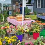 Farmers Market flowers, Chatham